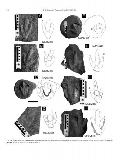 L.-D. Xing et al. / Palae