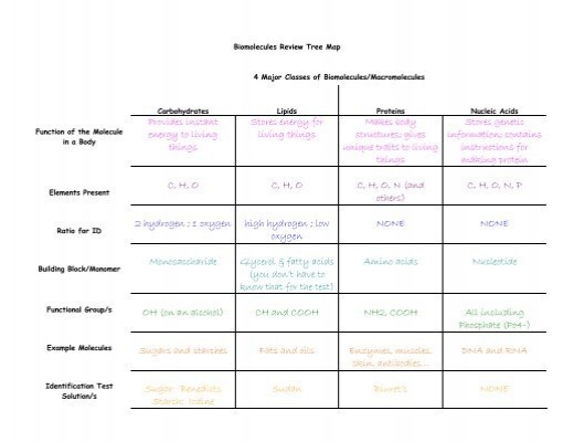Biomolecule Review Tree Map Answers