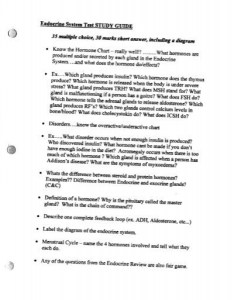 also endocrine system test study guide multiple mrs stovel rh yumpu