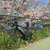 桜の花を見に荒サイへ