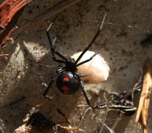 Top 15 Spider Myths
