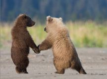 15 Fabulous Examples Of Animal Photography Grizzly Bear ...