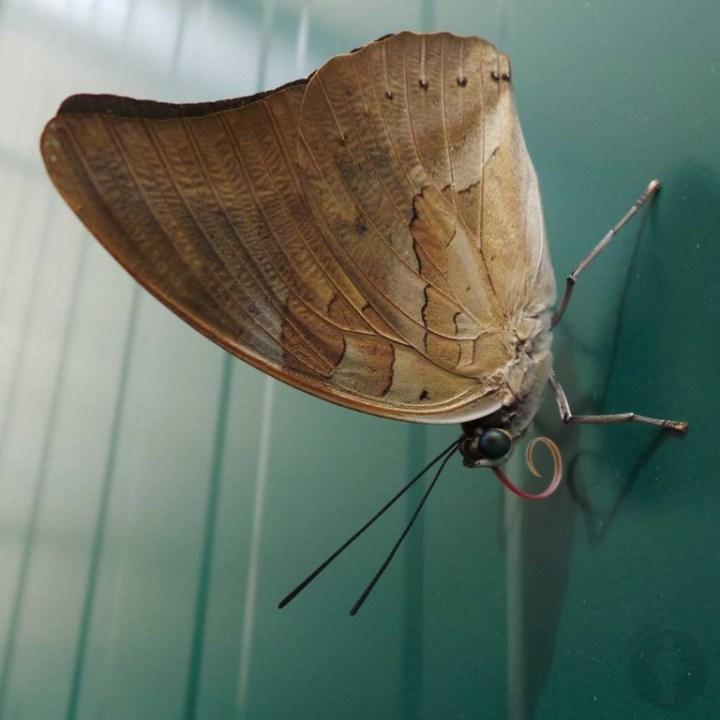 Foto8-Vlindersafari-Gemert-YuStSoMe