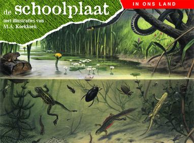 Schoolplaten, boek, foto, afdrukken, fotocadeau.nl, cadeau, geven, vaderdag, verjaardag, moeder, feest, foto, afdrukken, beautysome