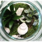 Plant, Rebelz, planten, stekjes, kwekerij, planten, influencer, huis, groen, vingers, beautysome
