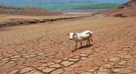Bundelkhand Drought