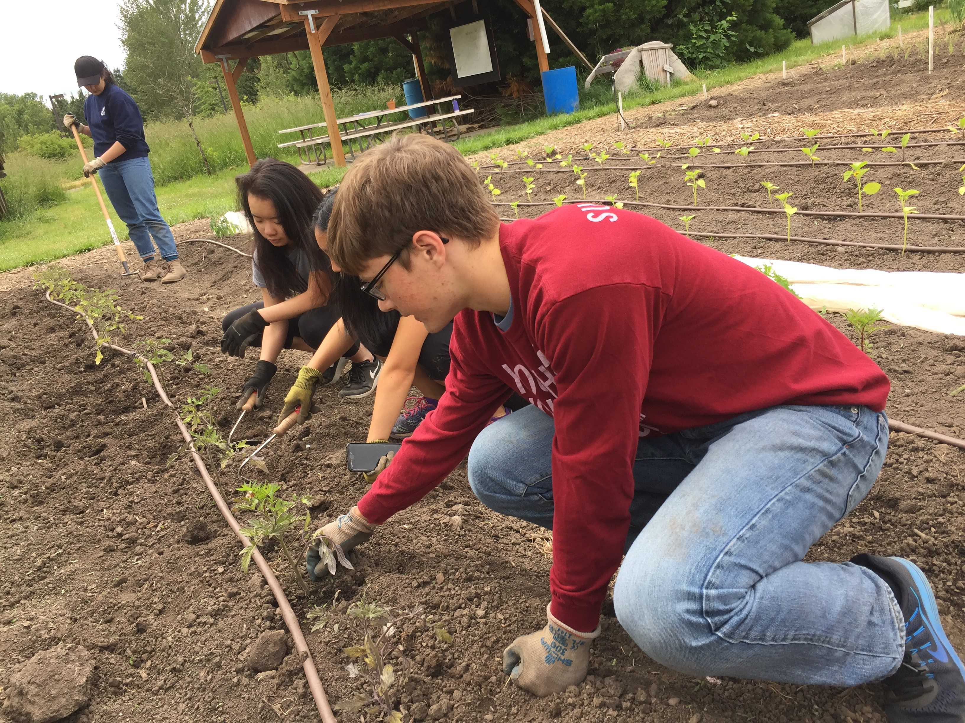 Youth Volunteer Corps Before and After - Community Garden - Youth