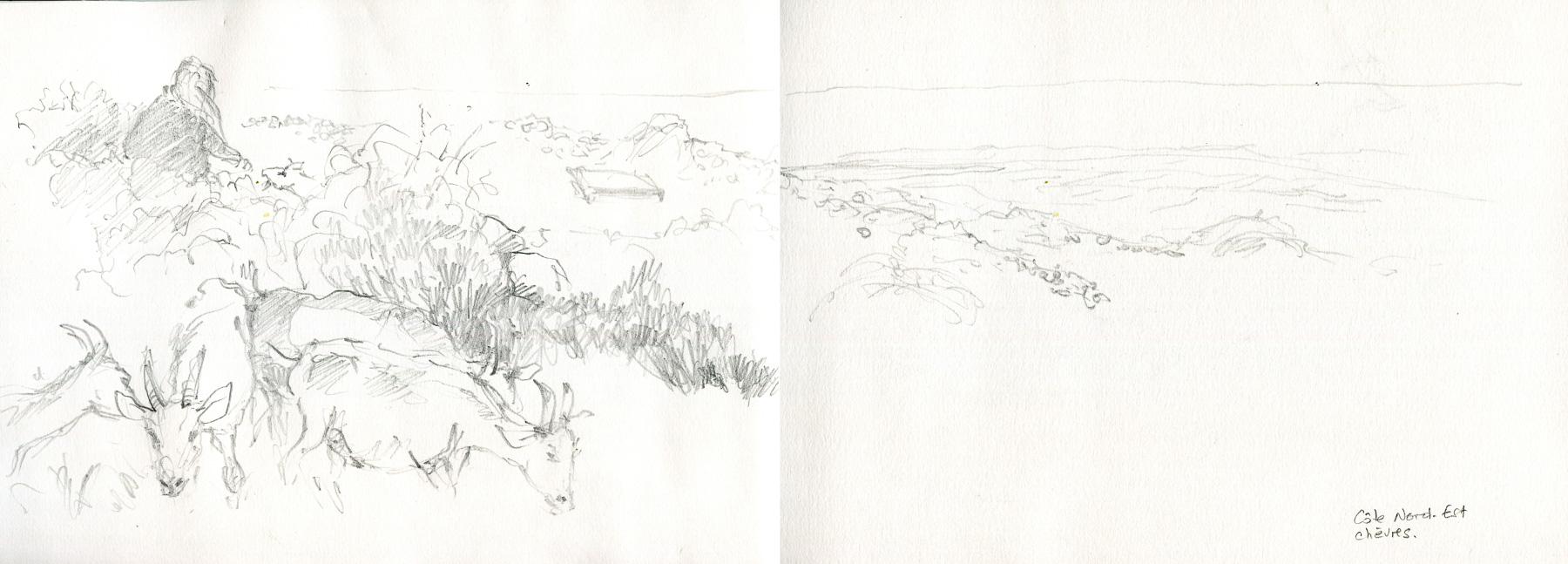 Inis More. Chevrière et ses chèvres. Seule élevage de l'île.