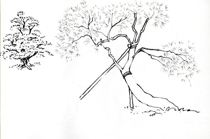 Kanazawa-Kenrokuen-2-1800