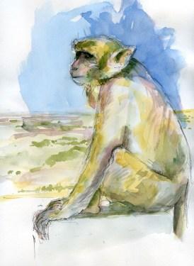 Mont-popa-singe-2-1800