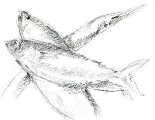 marche-poisson-2-1800
