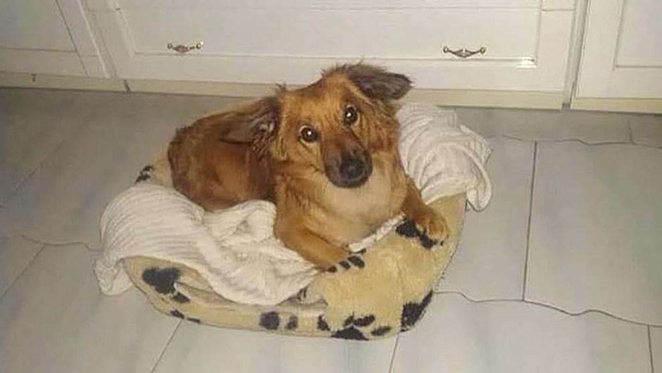Mia, la cagnolina licodiese disabile cerca una famiglia