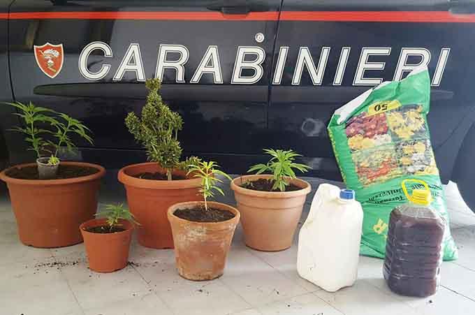 Nicolosi, due arresti per coltivazione di marijuana