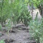 """Adrano. Fratelli coltivatori """"d'erba"""": 2 arresti per droga"""