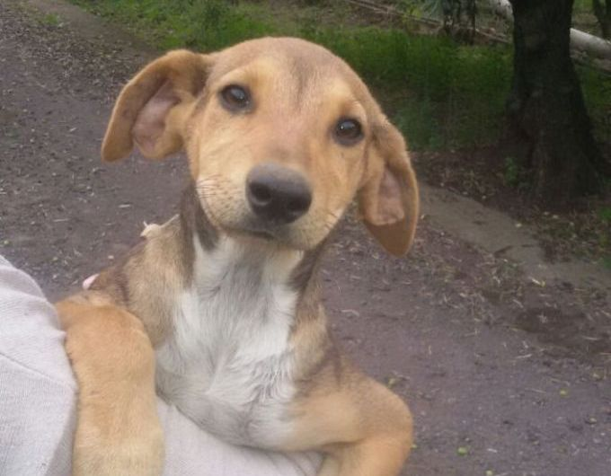 """Cuccioli cercano casa: le adozioni di """"Porgi l'altra zampa"""""""