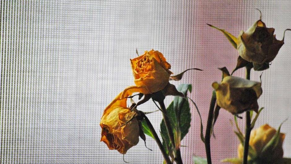 San Valentino: «Amore non è truccarsi i lividi»