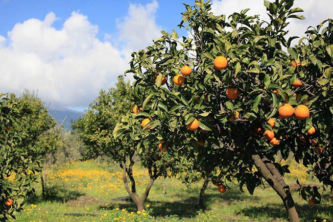 Paternò. Sequestrato 370 chili di arance ad ambulanti