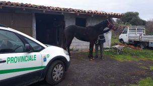 cavallo_sequestro_licodia_22_02_18 (4)