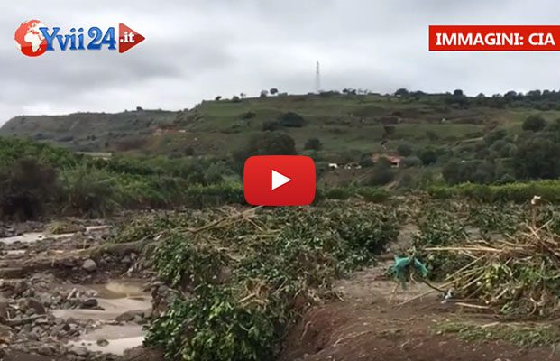 Nubifragio sul catanese: ingentissimi danni all'agricoltura
