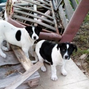 Belpasso. Muore il padrone, 10 cani in stato di abbandono