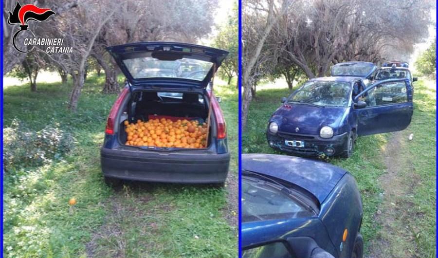 Castel di Iudica: Furto d'arance arrestati due fratelli paternesi