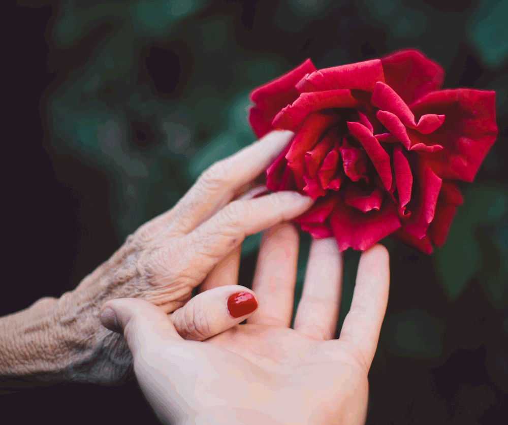 Older hand and child's hand holding a rose.