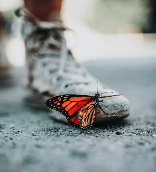 Butterfly on a boot