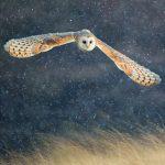 Wildlife Trust Barn Owl Christmas Card