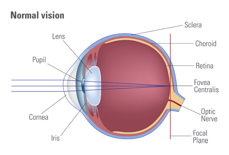 Your vision | How the eye works
