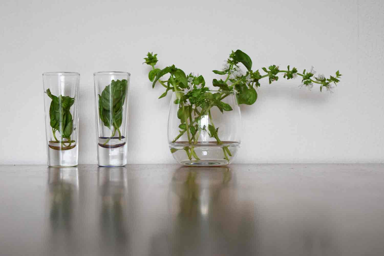 Creer een duurzame urban jungle met gratis stekjes en
