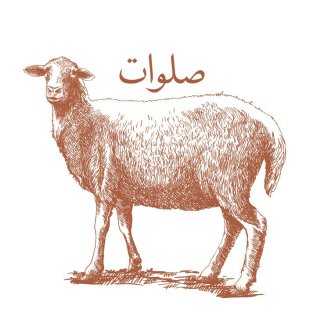 Salawaat Sheep