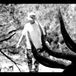 NM Elk