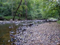 Eno River beside Holden Mill Trail