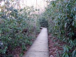 Boardwalk around Hanging Rock Lake
