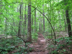 Birkhead Mountain Trail