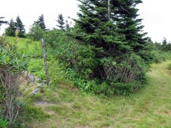 Junction with the Woody Ridge Trail