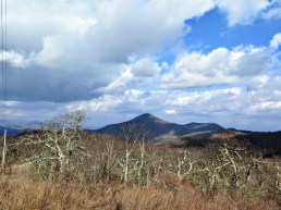 View north of Mount Pisgah from below the lookout tower