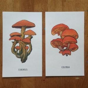 Mushroom print set