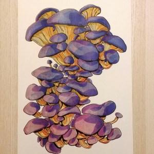 big blue oyster mushrooms