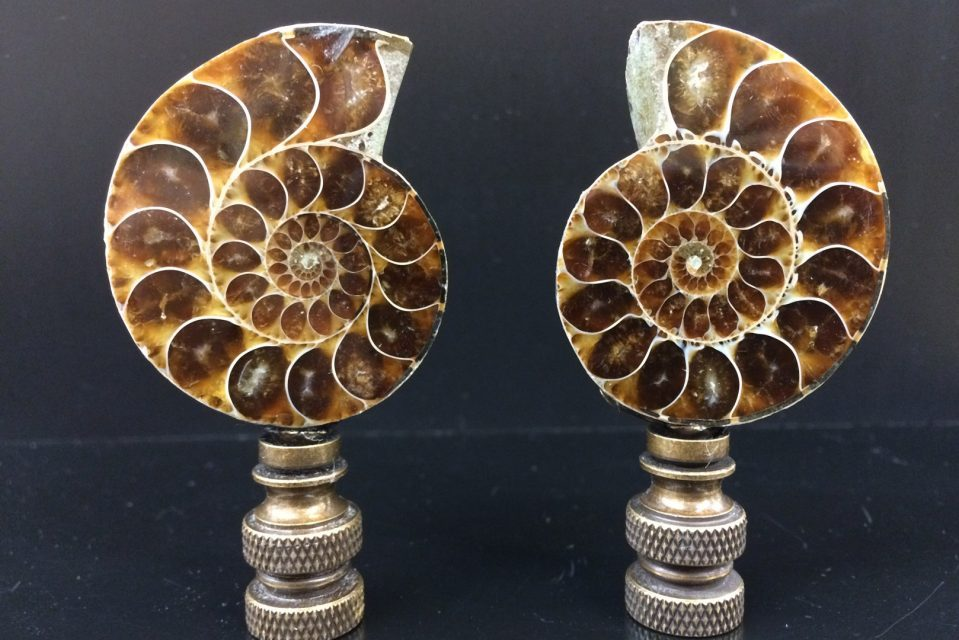 Pair Of Ammonite Finials