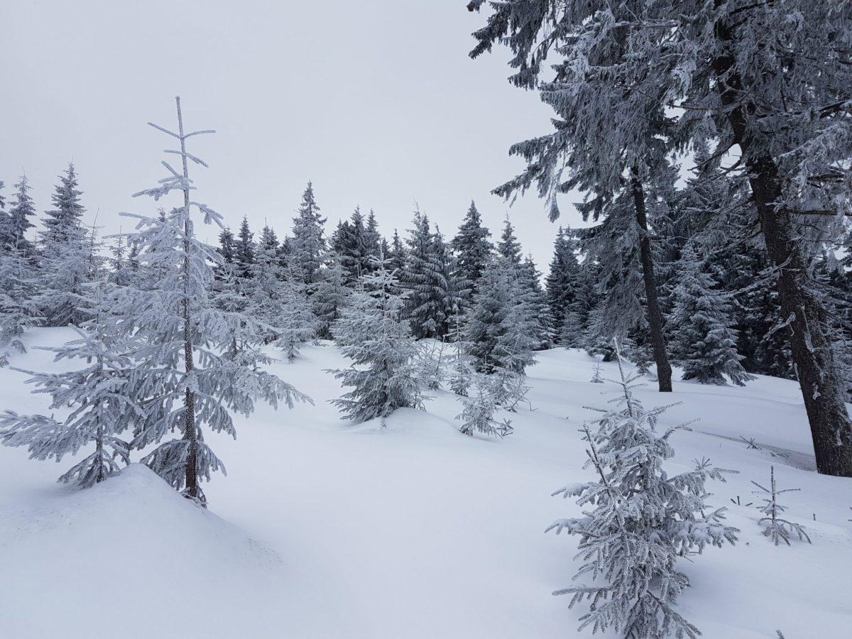 turbacz zimą