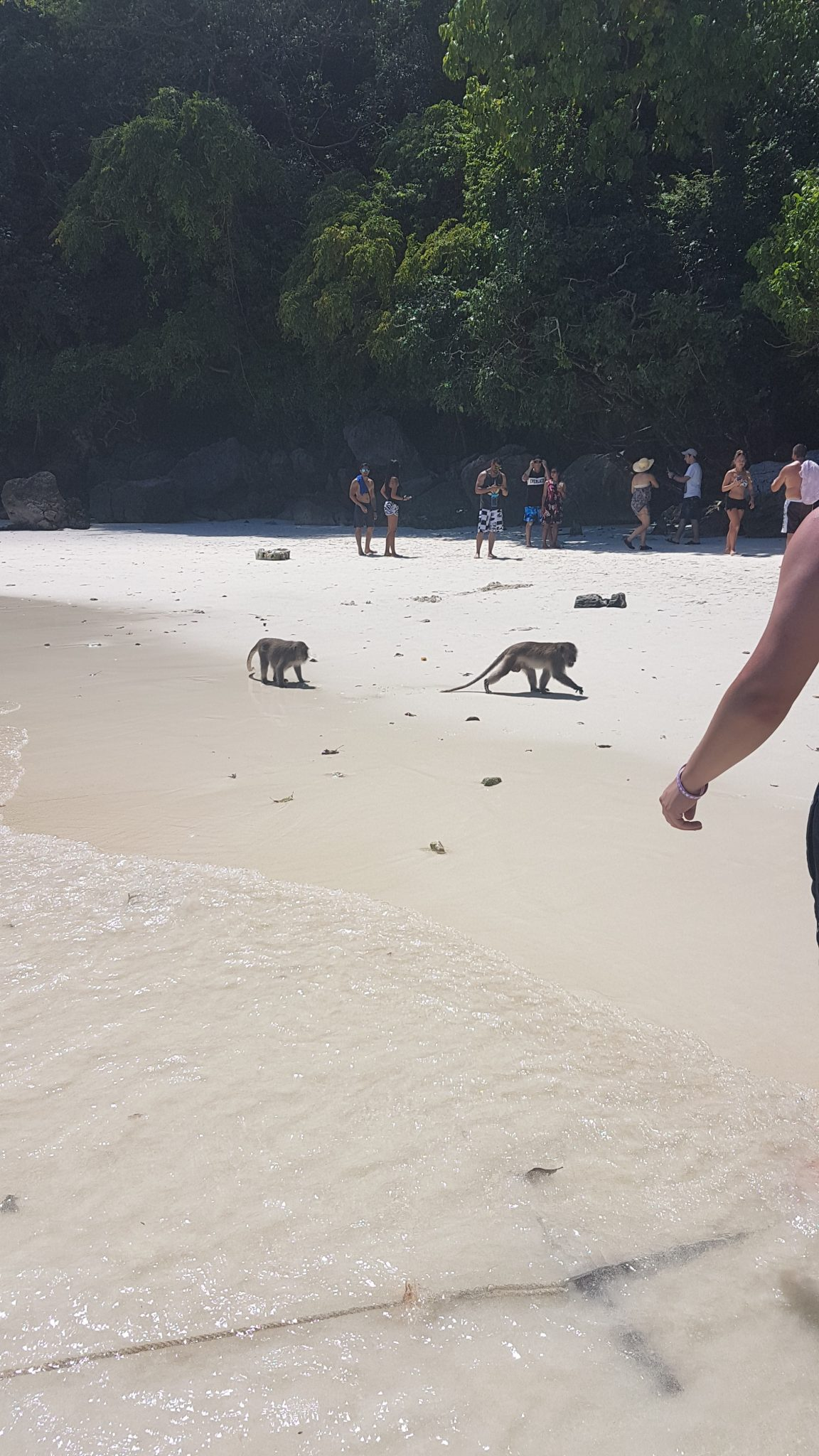 Tajlandia monkey island