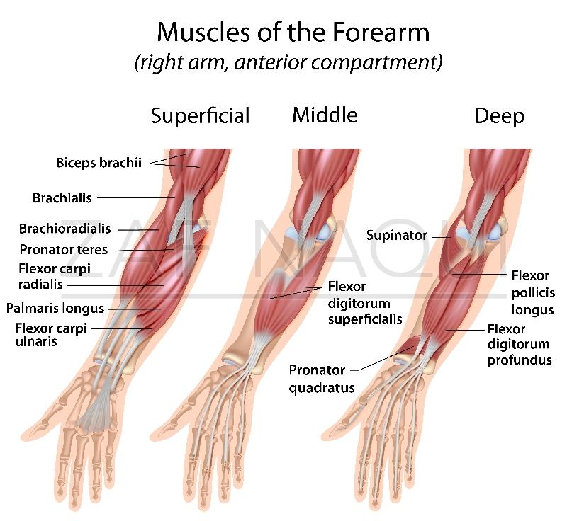 hand nerves diagram toyota hilux 2003 radio wiring zaf naqui | anatomy
