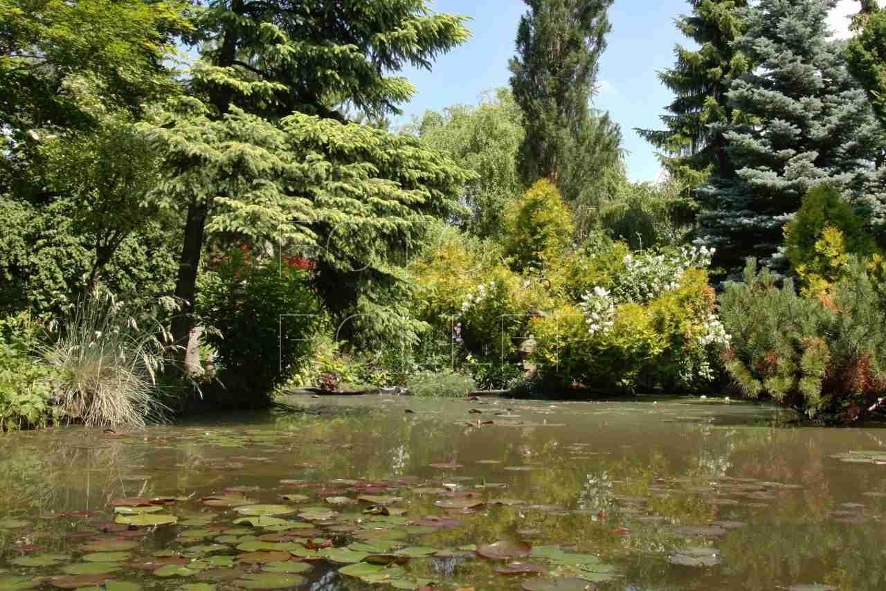 Jezírku by bez vodních rostlin něco chybělo