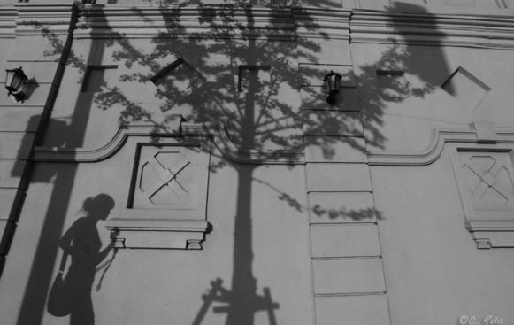 Sombras de mujer y árbol sobre la pared.