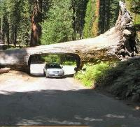 Tree tunnel?