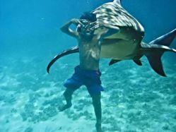 paf-le-requin