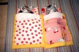 chatons kawai dorment