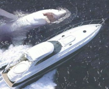 requin yatch