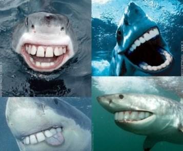 requin humour fun drole